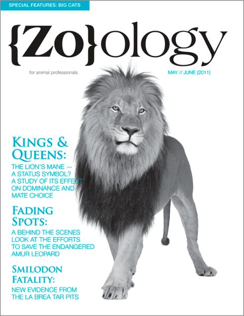 Zoology Magazine Cover Design
