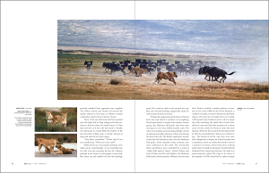 Zoology Magazine Spread 4